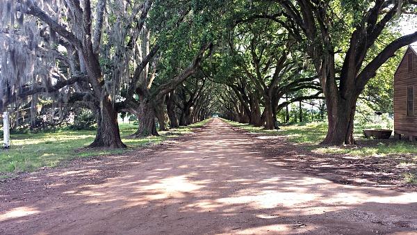 Oak Alley Near New Orleans, Louisiana