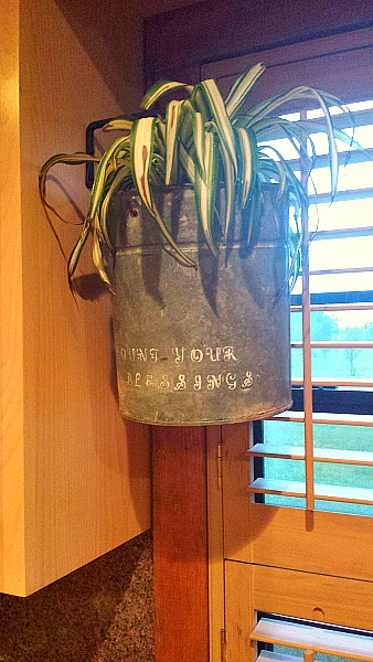Cute old metal bucket used as a planter hanging in a kitchen window.