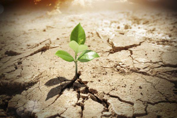 Weeds: Hope Versus Despair